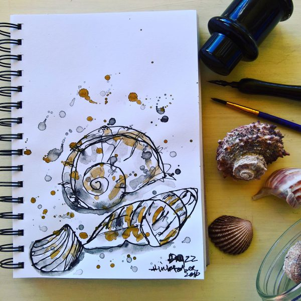 Seashells Ink - Hand Drawn Illustration